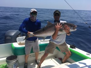 amberjack-offshorefishing-charleston